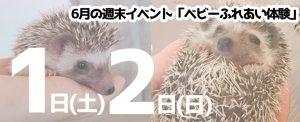 6月8日(土)・9日(日)仙台・山形同時」開催!「ハリネズミくじ引き!」