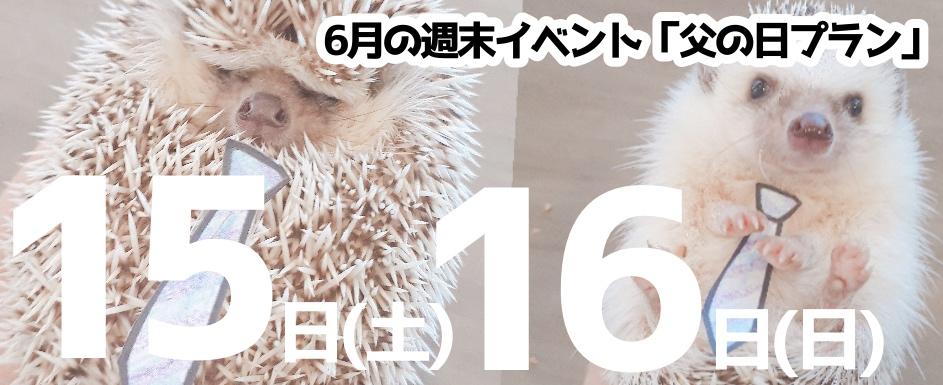 6月15(土)16(日)はお父さんの触れ合い料金が半額の【父の日プラン】開催!