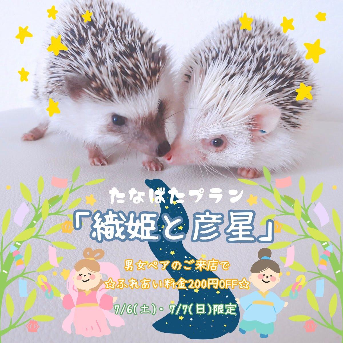 今週末は、男女ペアのための七夕プラン【織姫と彦星】を開催!!